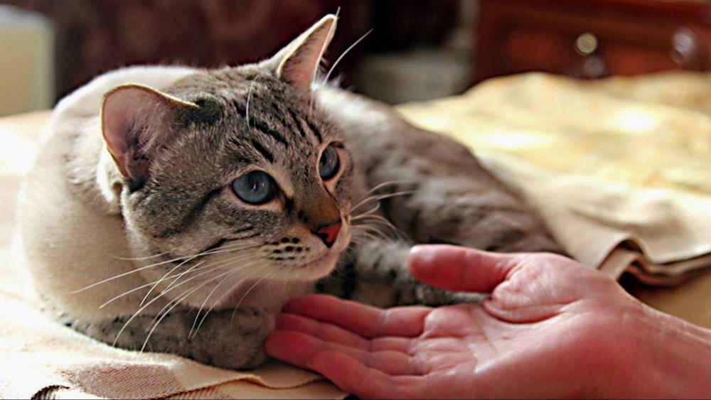 Η περιποίηση μιας άρρωστης γάτας